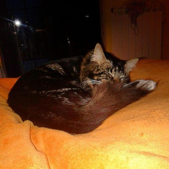Relax in rainy days Igcats Cats