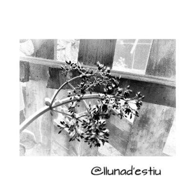 Bon dia! De divendres. Lloretdemar Igersgirona Incostabrava Catalunyafotos catalunyaexperiencie descobreixcatalunya fotosdesomni fotodeldia gf_spain gf_daily igerscatalonia ikg_photosflors flowers natura