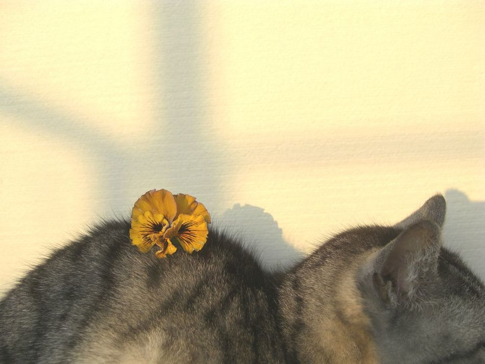 Pensées Chatte Pansy Lovely Cat Crépuscule ねこ 黄昏 パンジー Mi Gata Art Is Everywhere