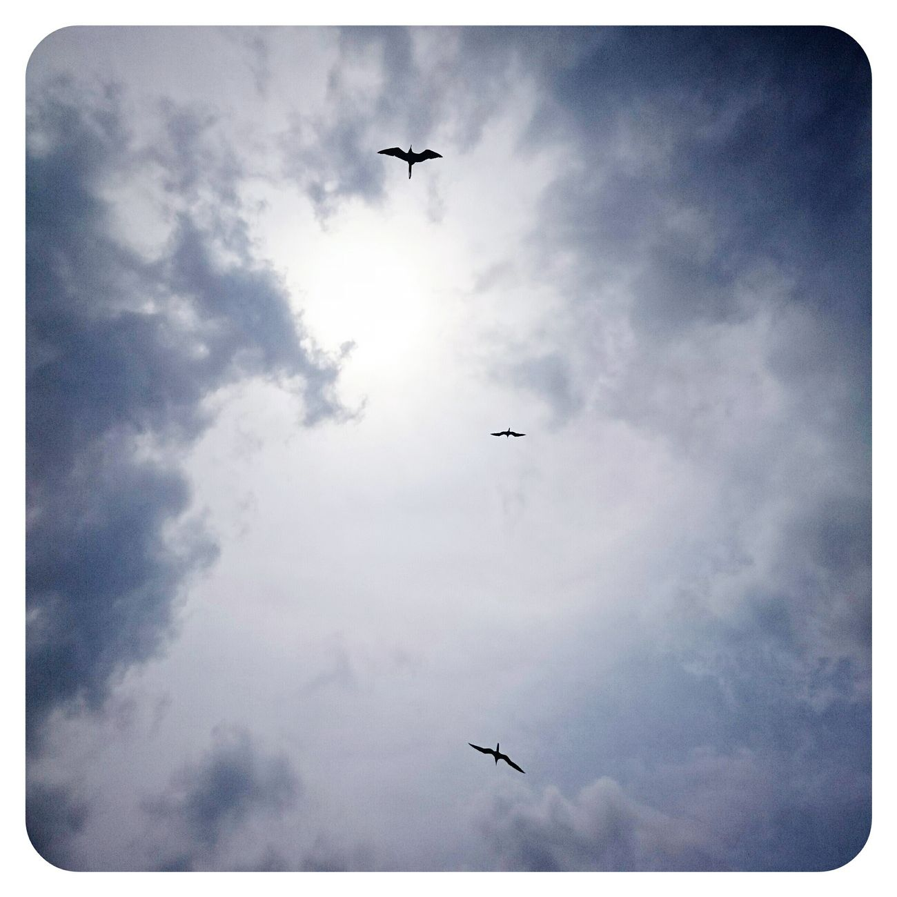 Sky And Clouds Birds Pterodactyl