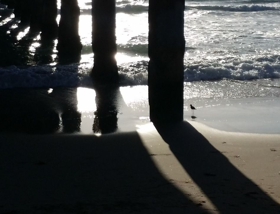 Under the Pier at the golden hour....... Beach Beauty In Nature Bird Close-up Day Eye4photography  EyeEm Best Shots EyeEm Best Shots - Nature EyeEm Gallery EyeEm Nature Lover Golden Hour Leisure Activity Nature Ocean Outdoors Picsartrefugees Pier Reflection Shadow Silhouette Sunlight Water