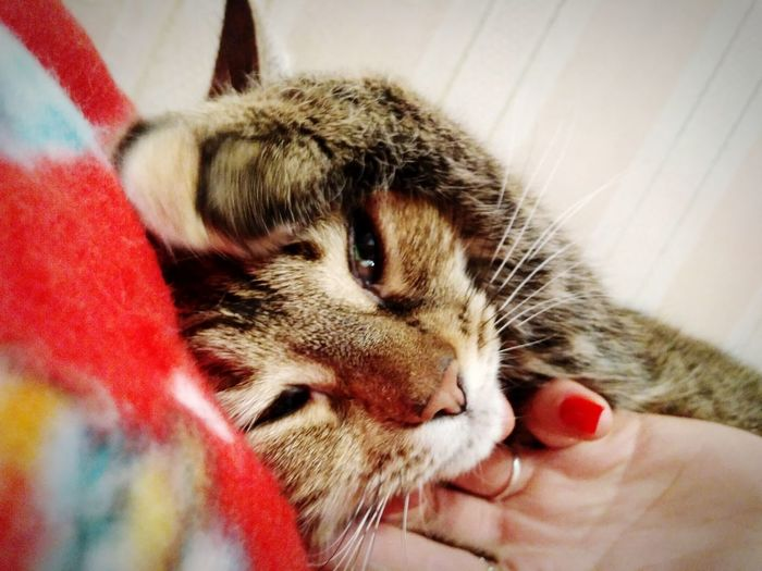 Pets Domestic Animals Animal Themes Domestic Cat Human Hand Day First Eyeem Photo