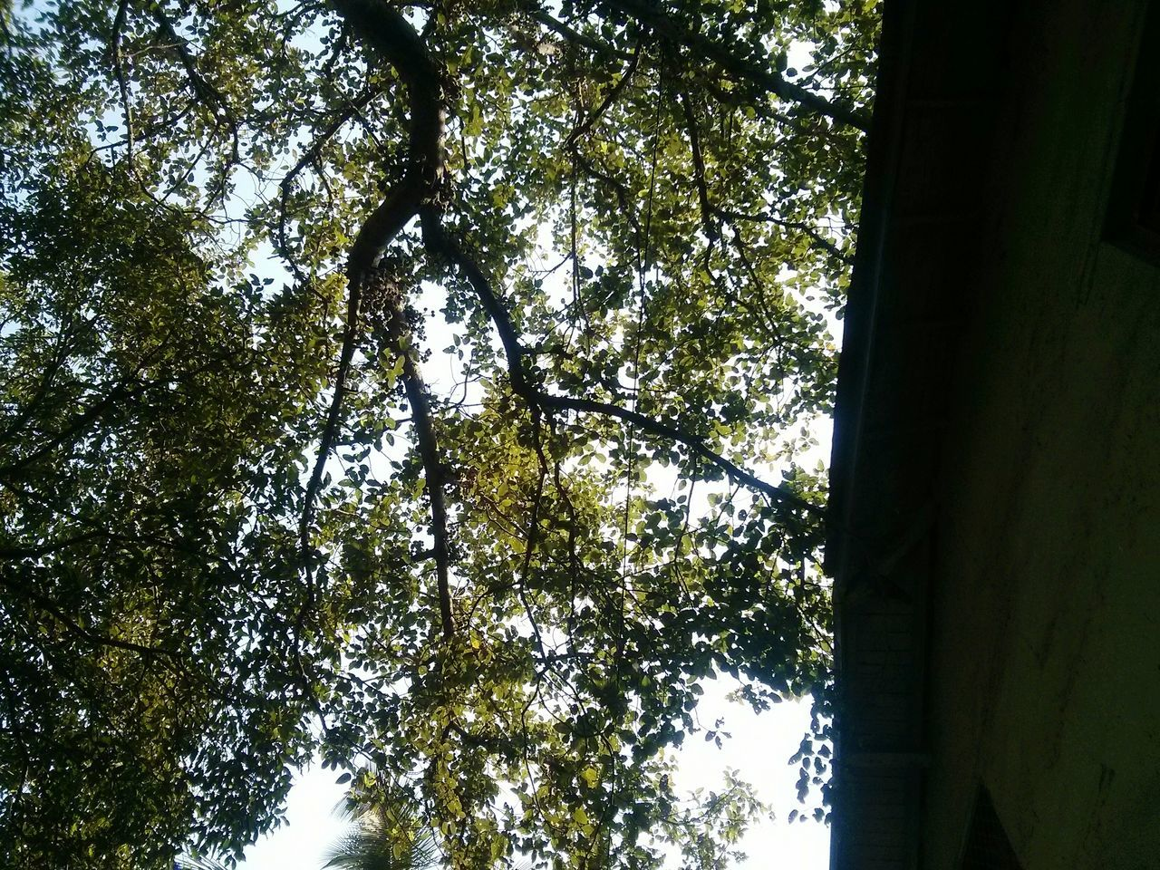 tree, low angle view, growth, day, nature, forest, tree trunk, branch, no people, outdoors, beauty in nature, sky