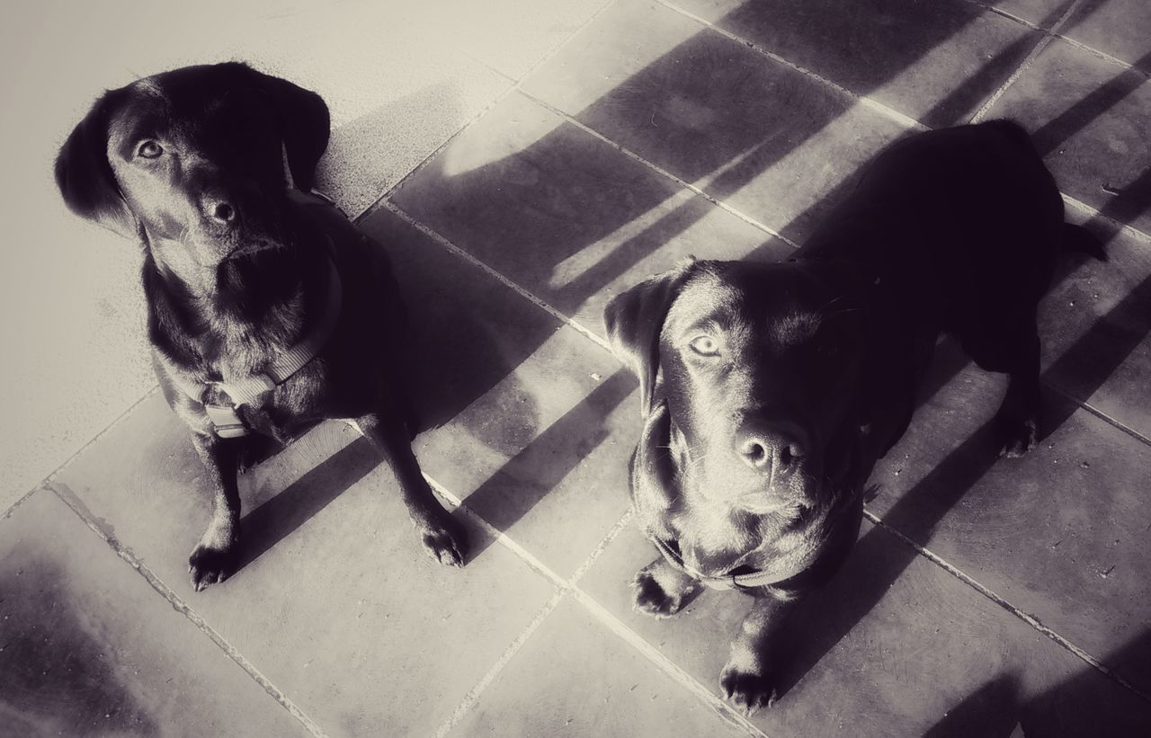 Lifestyles Togetherness Pets Labrador Photography Friendship Emotion In Life Looking At Camera Photos Around You Photographylovers LabradorRetriever Emotional Photography Animal Themes Labradorlover Emotions Captured Domestic Animals