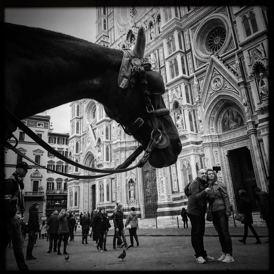 Built Structure Real People Outdoors Horse City Life Streetphotography Italy Blackandwhite