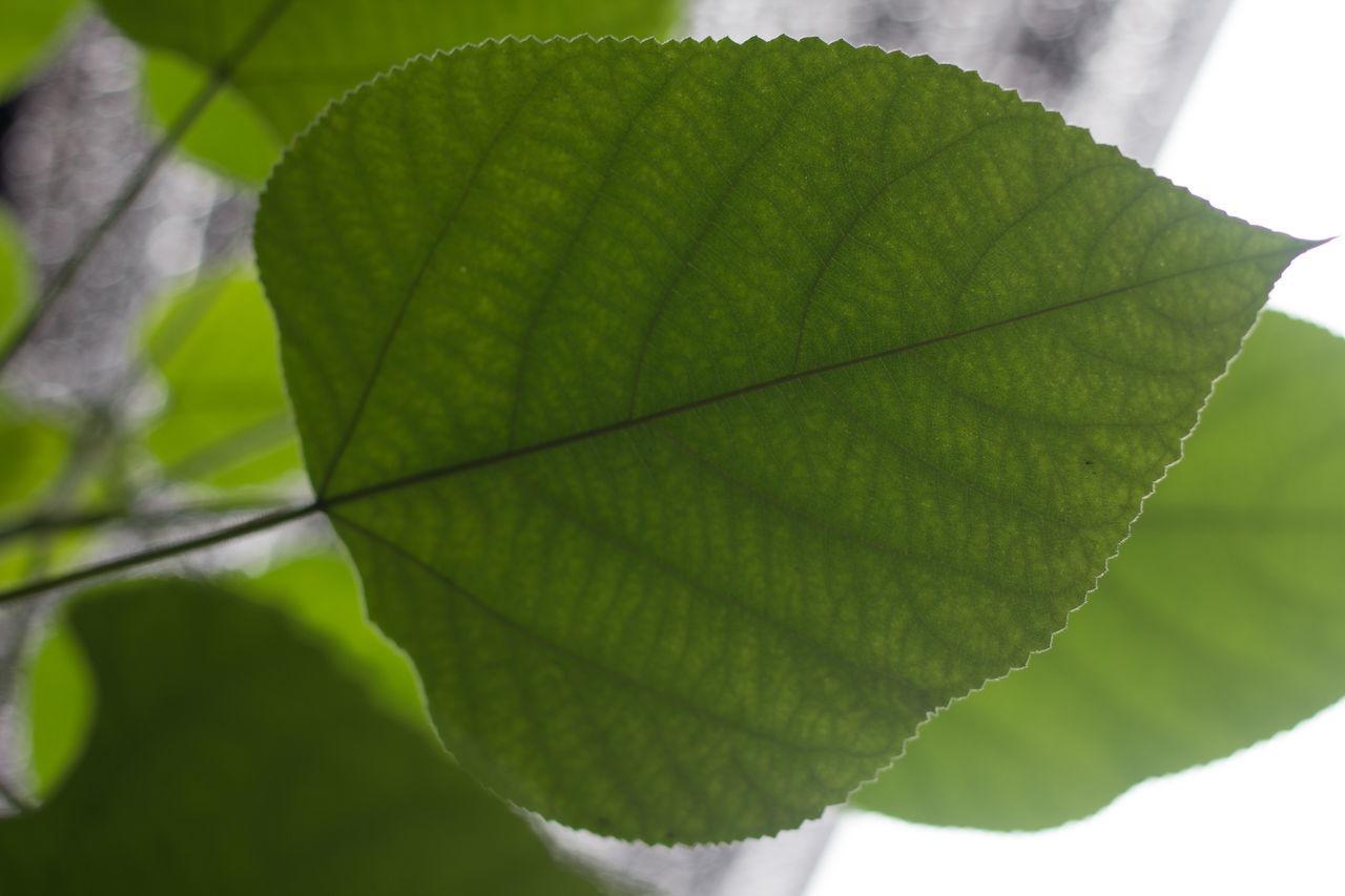 Green Color Leaf Leaf Lighting Look Under The Leaves Plant