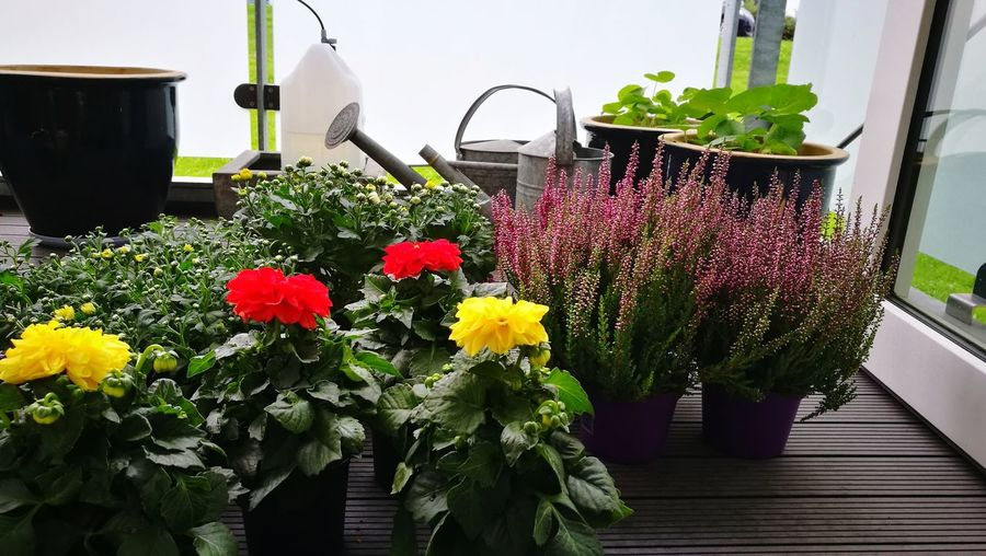 Flower Freshness Plant No People Day Nature Outdoors Balcony Life Balcony Garden Summertime Foto Close-up