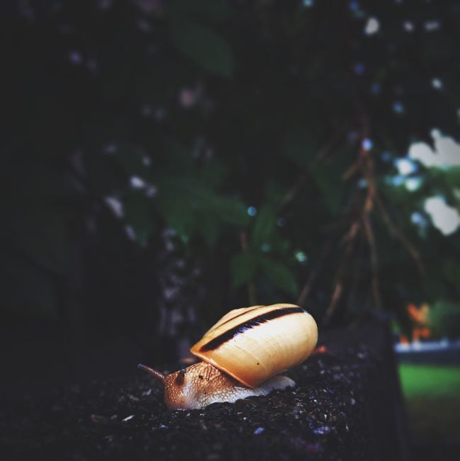 Close-up No People Snail Dark Rain Snapshot Streetphotography Darkness And Light Eyem Best Shots Watching IPhoneography Mobilephotography