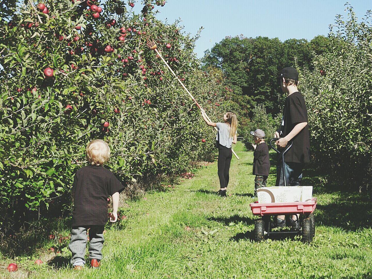 Beautiful stock photos of apple, 10-11 Years, 14-15 Years, 2-3 Years, 4-5 Years