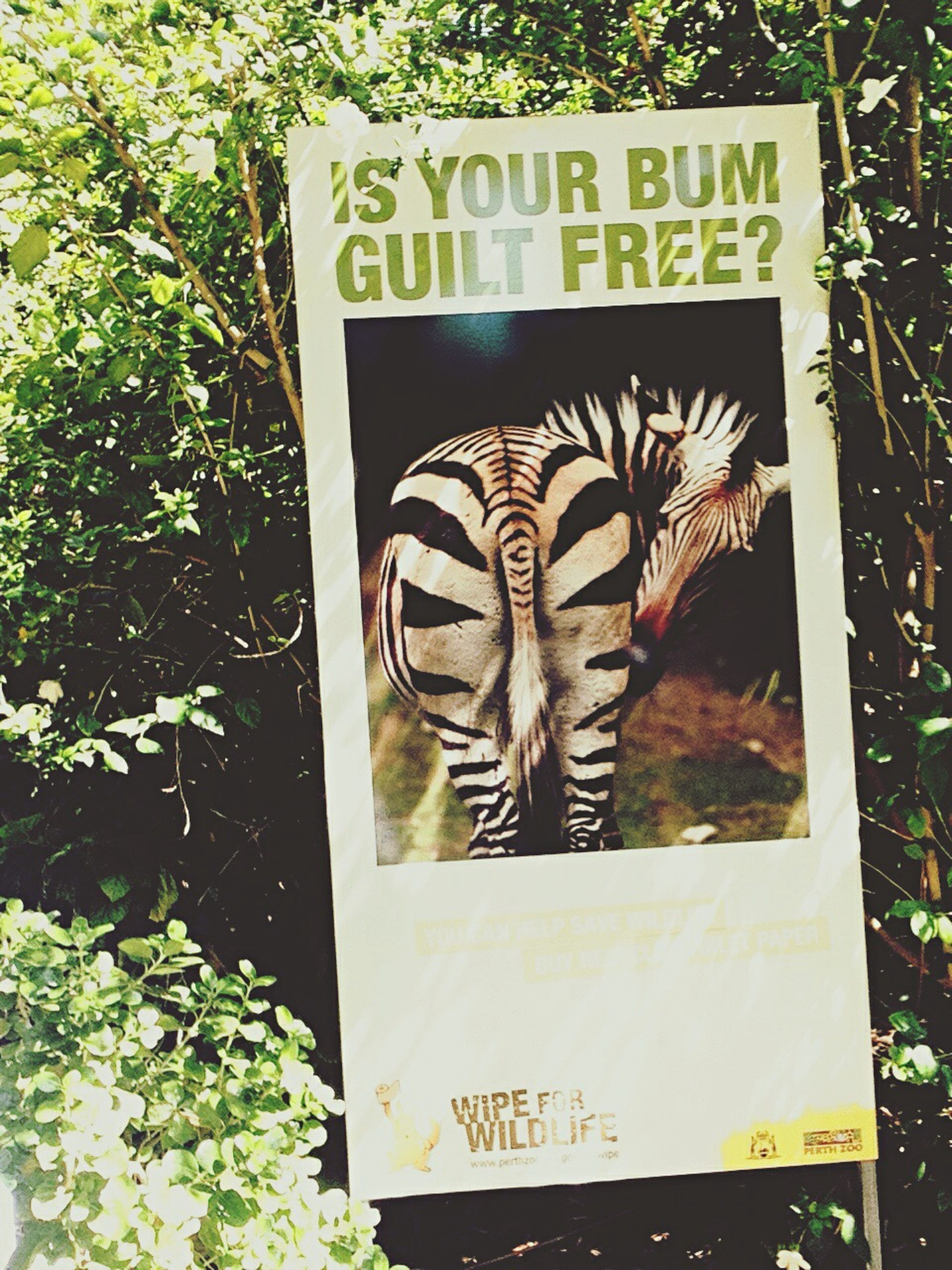 Quality Perth Zoo sign Funny Stuff GTimes