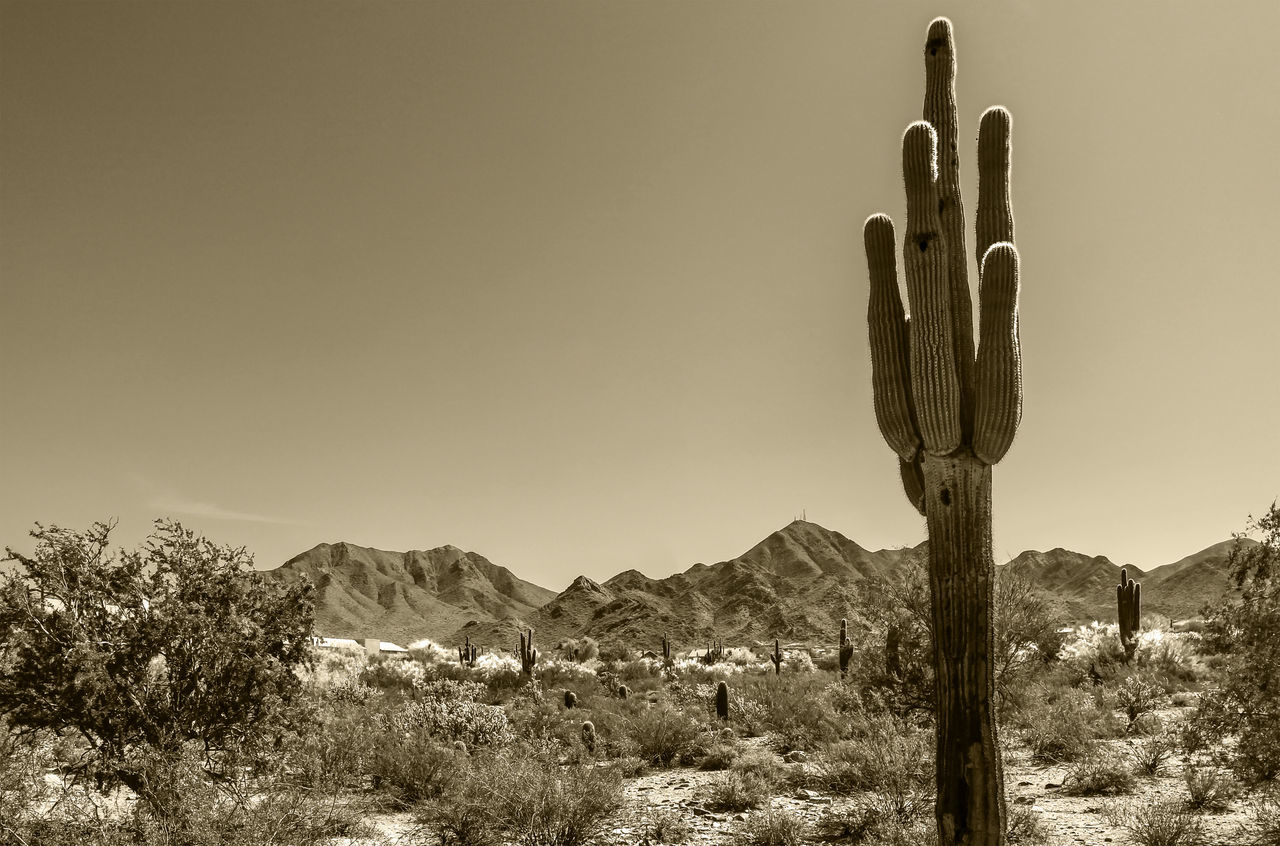 Cactus On Countryside Landscape