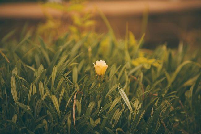 Good evening! Iyi akşamlarınız olsun! ☺️😀 Taking Photos Bisgen Enjoying Life Relaxing EyeEm Best Shots EyeEm Best Edits EyeEm Masterclass EyeEm Nature Lover Flowers Nature