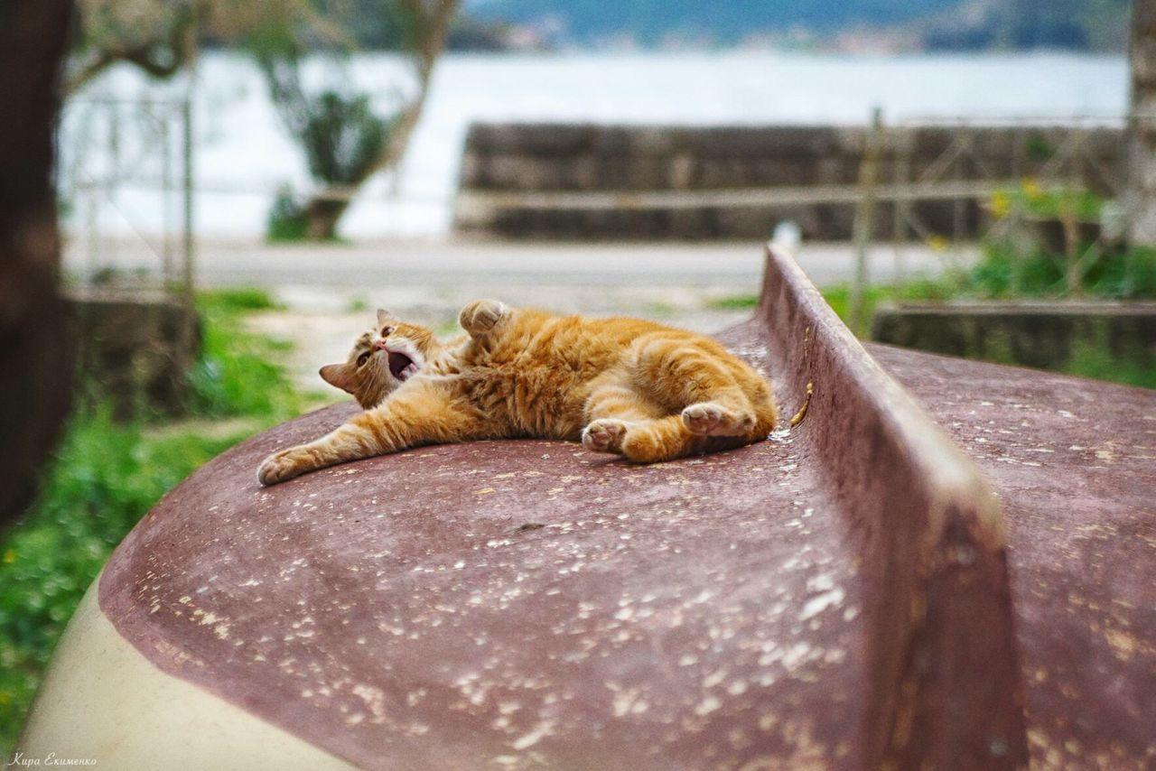 EyeEm Selects Day Cat Relaxation
