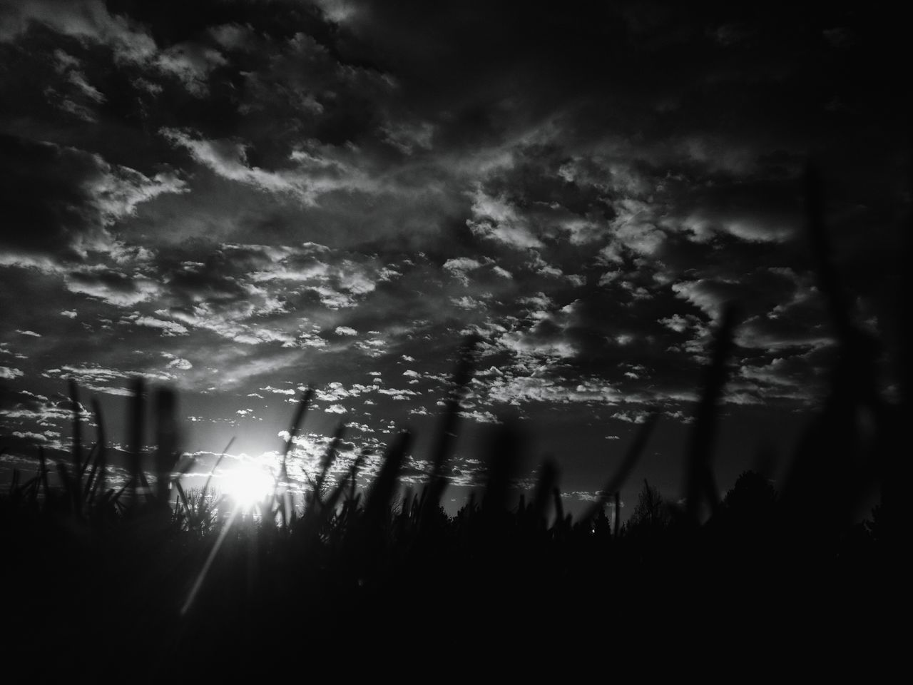 Morning In Mourning Silhouette Morning Sun Macabre Photo Macabre Sunrise_Collection Warhol Inspired Dramatic Sky Sunrise Silhouettes Landscape Silhouette Beauty In Nature Landscape Fall Collection Black And White Collection  Blackandwhite Sunbeam Sunrise Sunrays October Dark Clouds Darkart Cloudscape Grass Autumn Low Angle View