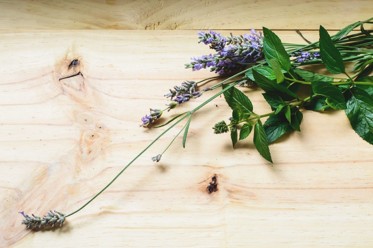 Mint family healthy healing herbs Lavender flowers and flowering mint on wood background healthy lifestyle Flower Table Wood - Material No People Leaf Plant Indoors  Nature Growth Freshness Close-up Day Mint Family Mint Lavender Bunch