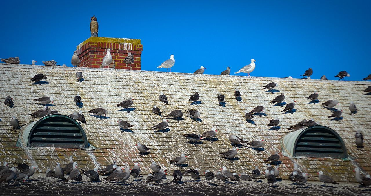 Low Angle View Of Seagulls Perching On Roof Against Sky