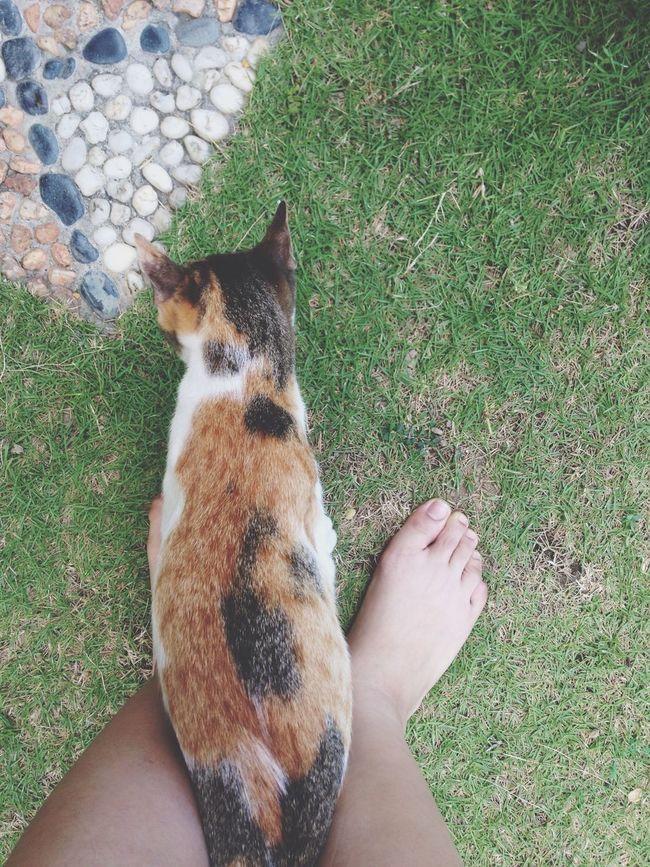 Random Taking Photos Cat Grass