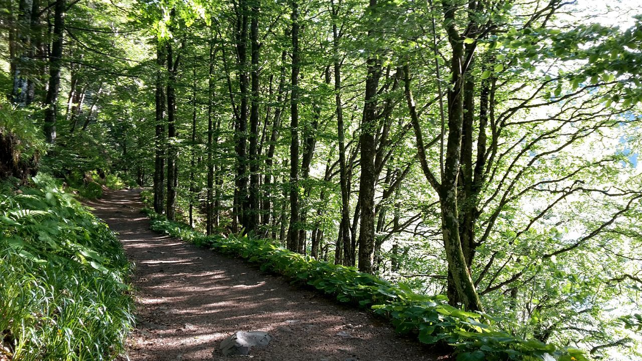 On The Way Pathin the Forest Lac Pavin Auvergne Showcase July
