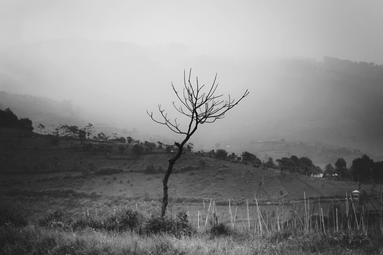 Nature Tree Plant Outdoors Branch No People Fog Rural Scene Landscape Sky Grass Beauty In Nature Day First Eyeem Photo The Great Outdoors - 2017 EyeEm Awards Mountain View Landscapes Black And White Black & White Monochrome