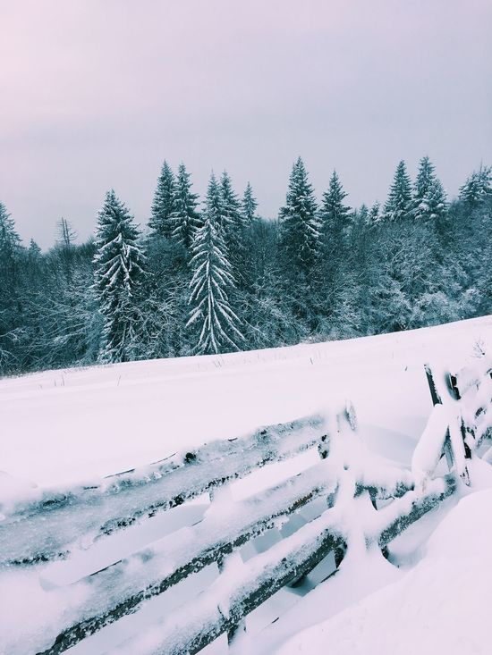 Snow Winter Cold Temperature Weather Nature Beauty In Nature Tree Sky No People Scenics Tranquil Scene Outdoors Tranquility Day