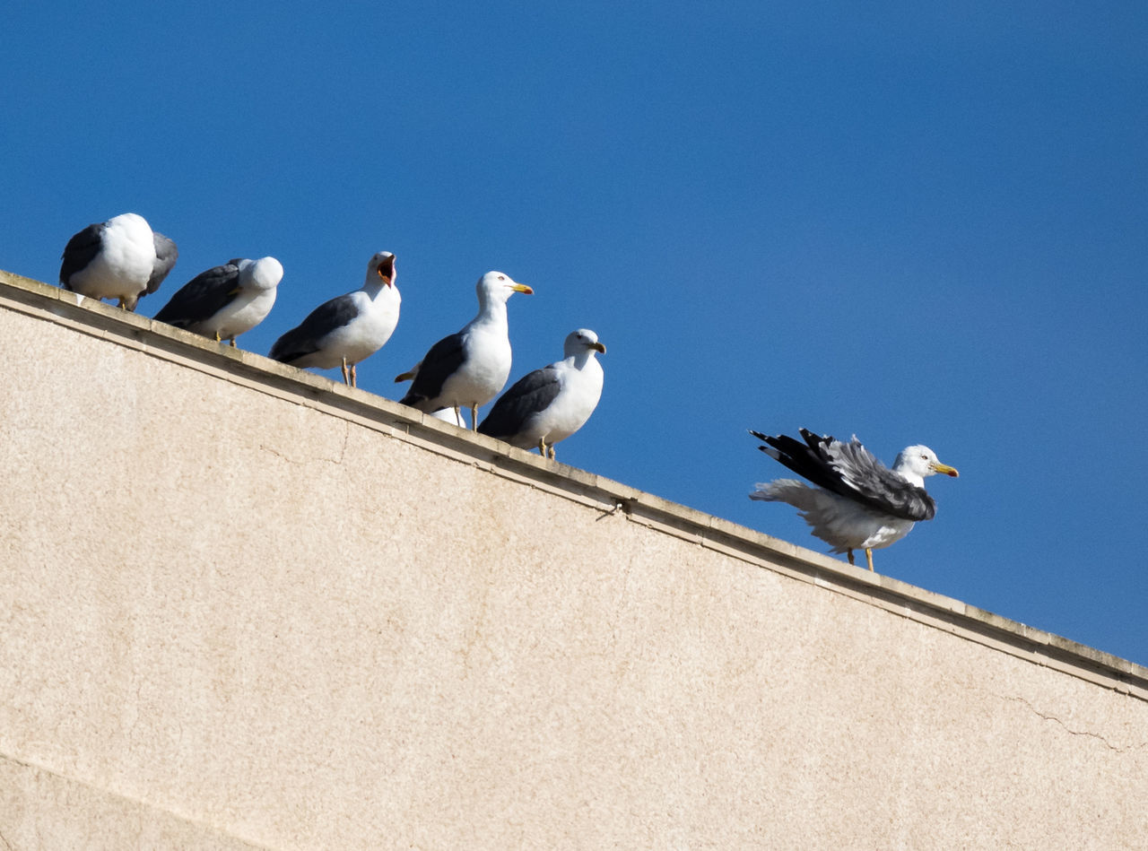 bird, animal themes, animals in the wild, animal wildlife, perching, day, seagull, low angle view, sunlight, outdoors, clear sky, no people, nature, large group of animals, spread wings