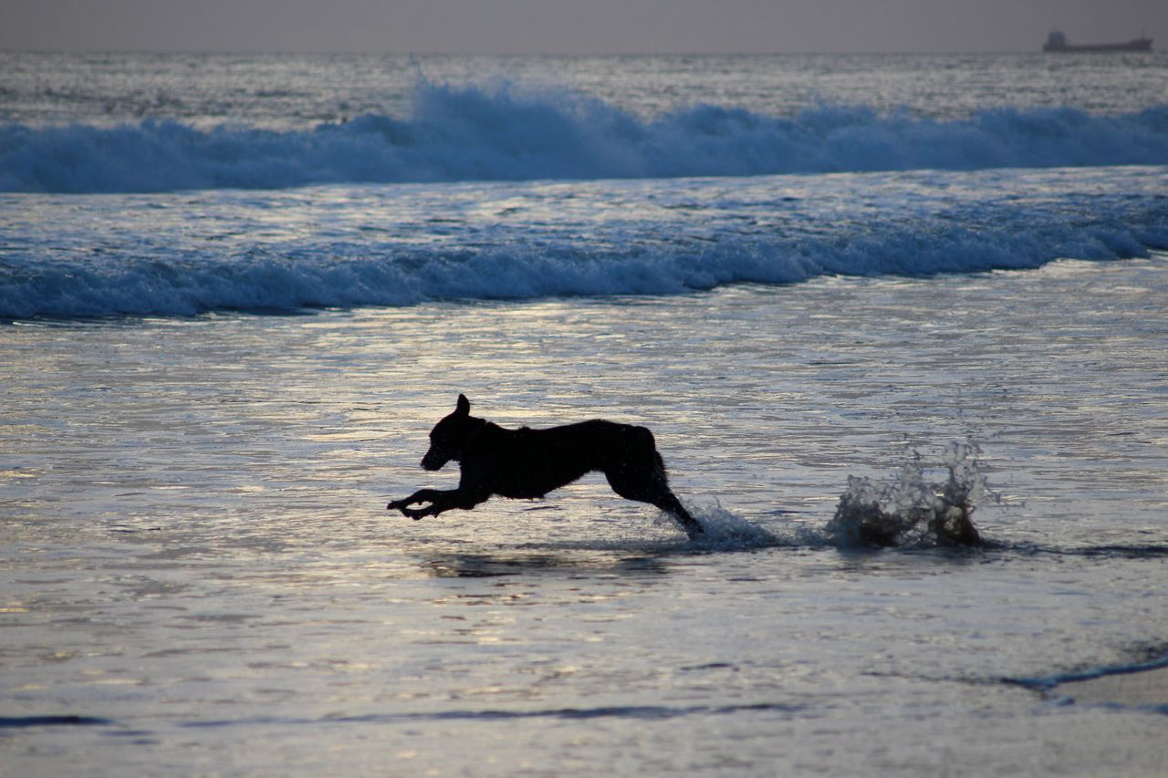 Animal Animal Themes Animals Beach Beauty In Nature Dog Dogslife Dog❤ Exceptional Photographs Horizon Over Water Nature No People Ocean One Animal Outdoors Pet Playing Running Sky Splashing Sunset Water Waterfront Wave Waves
