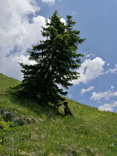 Nature Tree Green Color Beauty In Nature Outdoors Planet Earth Mountain Dog