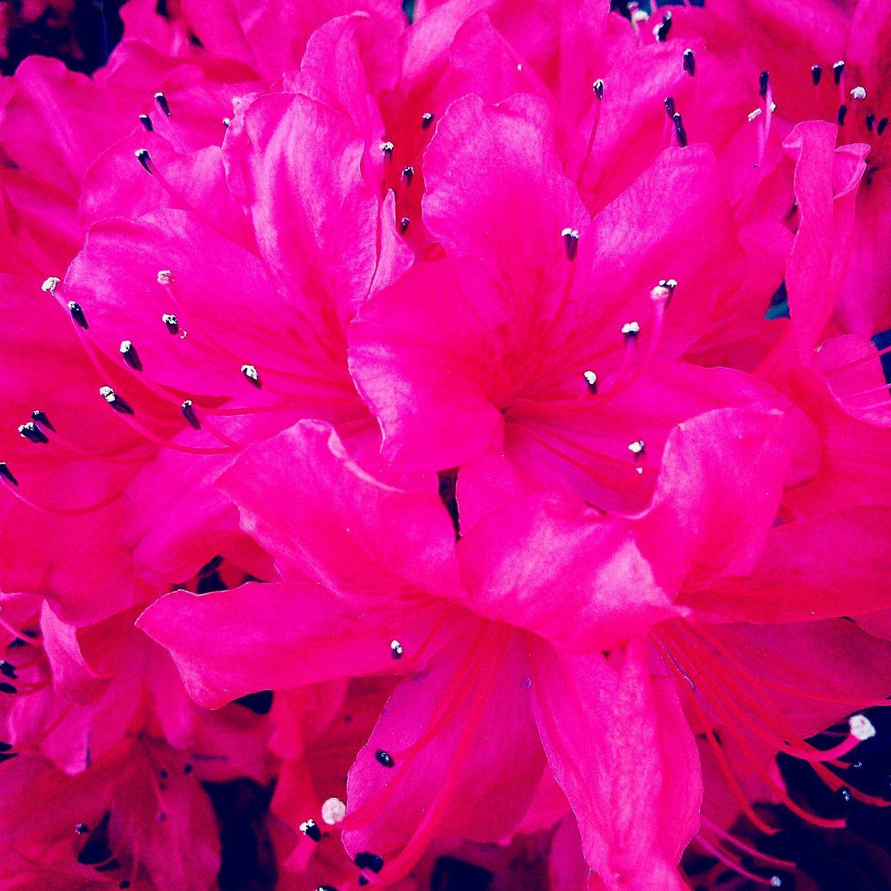 Flowers Enjoying Life Relaxing Eyemphotography Taking Photos EyeEm Nature Lover Spring Flower Power Flowers_collection
