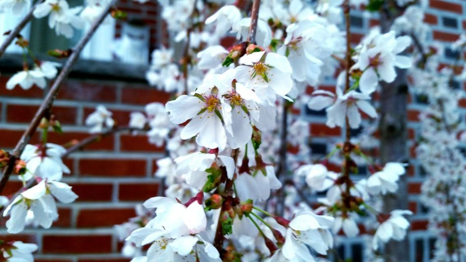 Hanging Out Taking Photos Check This Out Hello World Relaxing Enjoying Life Optimistic Photography Trees Flowers In Bloom f Flowers Spring Spring Photography