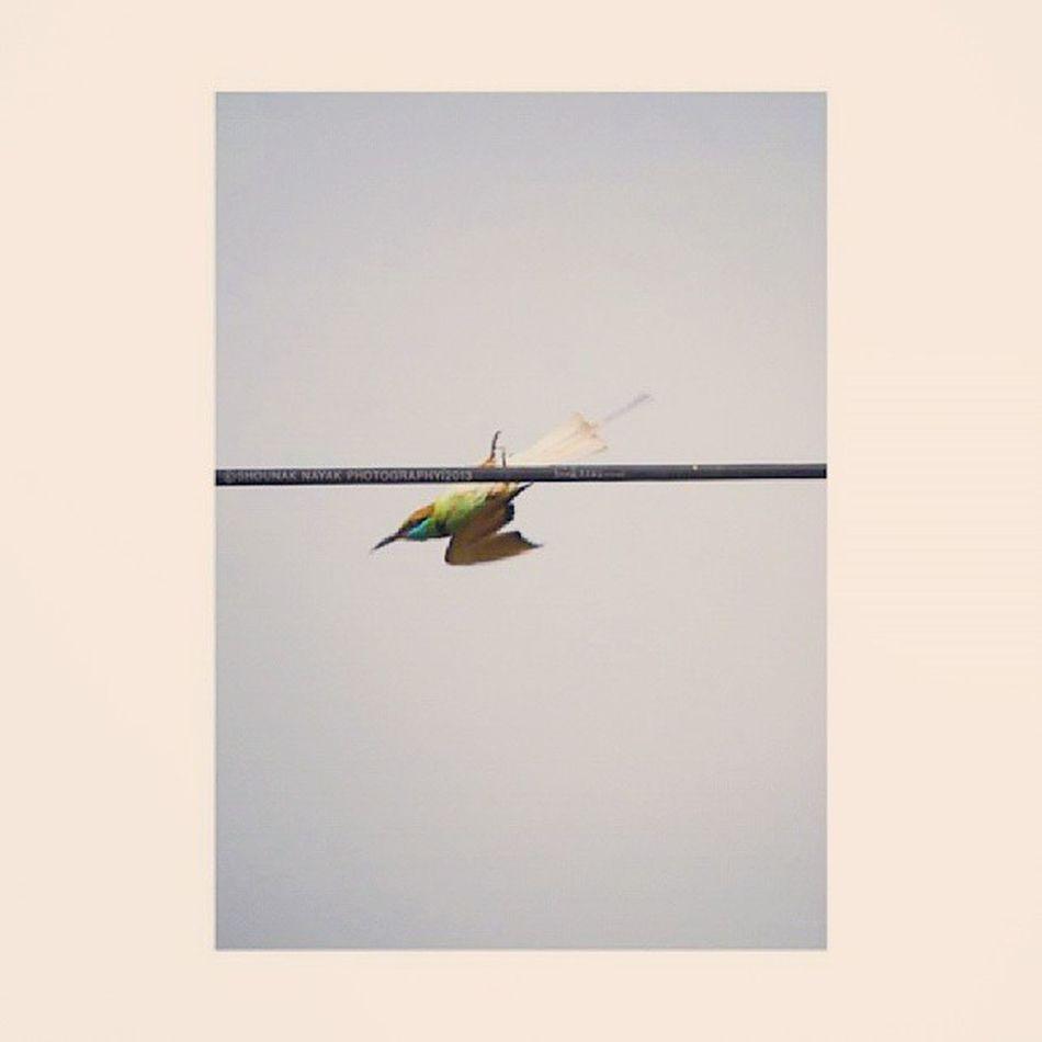 A leap of faith. ShounakNayakPhotography Bandhavgarh Wildlife Bird BeeEater