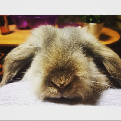 Sweet Cute Rabbit Love Pets My Live Honey Baby Without Eyes Haha Funny Fun Photo Animal Angel🐰🍀