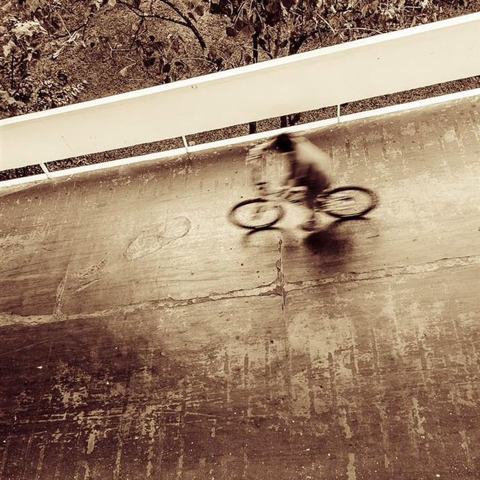 Parque do ibirapuera Ibi Fotografia D7000 Followme Encontrofui Instago Nature Natureza Nikon Sunday Tree Peoples Parque  Bike Splover Sampa Spwalker SP Euamosp Bw Pb Ciclismo Bresson Cartier