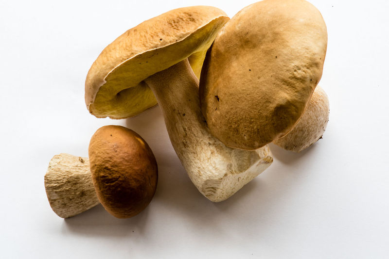 king bolete, Boletus edulis, Steinpilz Food And Drink Mushrooms Healthy Healthy Eating No People Ready-to-eat Studioshot Vegan Vegatarian White Background