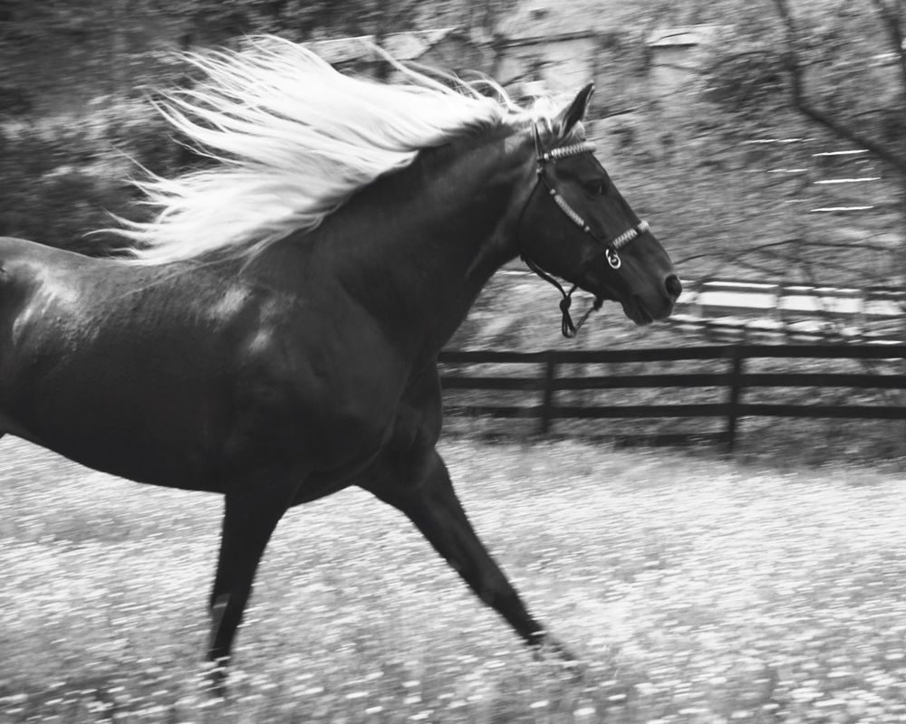 The most beautiful horse I know 😍 Freedom Kentucky  Field Of Dreams Horse