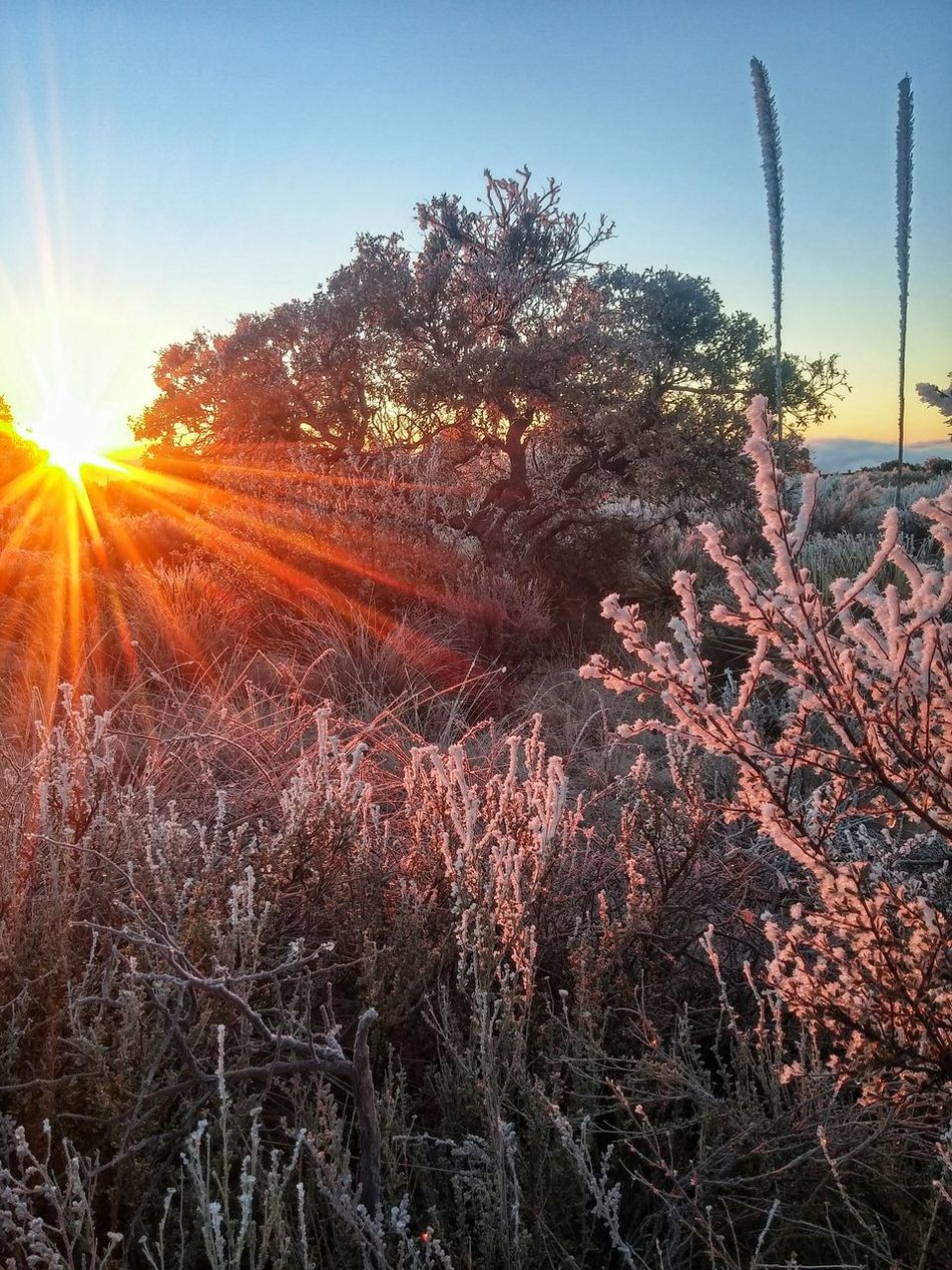 Violet colored snow. Guadalupe Mountains National Park Mountains National Parks Snow Covered Snow ❄ Snowy Morning Frosty Morning Frost Happiness ♡ Enjoying Life ♥ Relaxation Wonderful_places The Great Outdoors With Adobe The Great Outdoors Live Oak Yucca Plant Sunrise Sunset