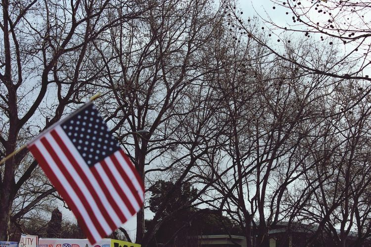 Women's March Walnut Creek CA Flag Patriotism Cultures Bare Tree Stars And Stripes Striped Low Angle View Tree No People Branch Outdoors Day Sky Womensmarch EyeEmNewHere