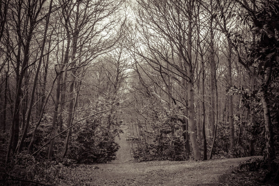Bare Tree Beauty In Nature Black & White Black And White Branch Day Forest Landscape Lots Of Leaves Monochrome Nature No People Outdoors Scenics Sky The Way Forward Tranquil Scene Tranquility Tree Trees WoodLand