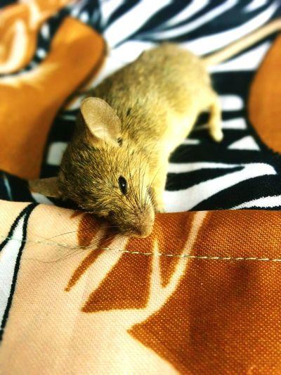 Innocent mice First Eyeem Photo
