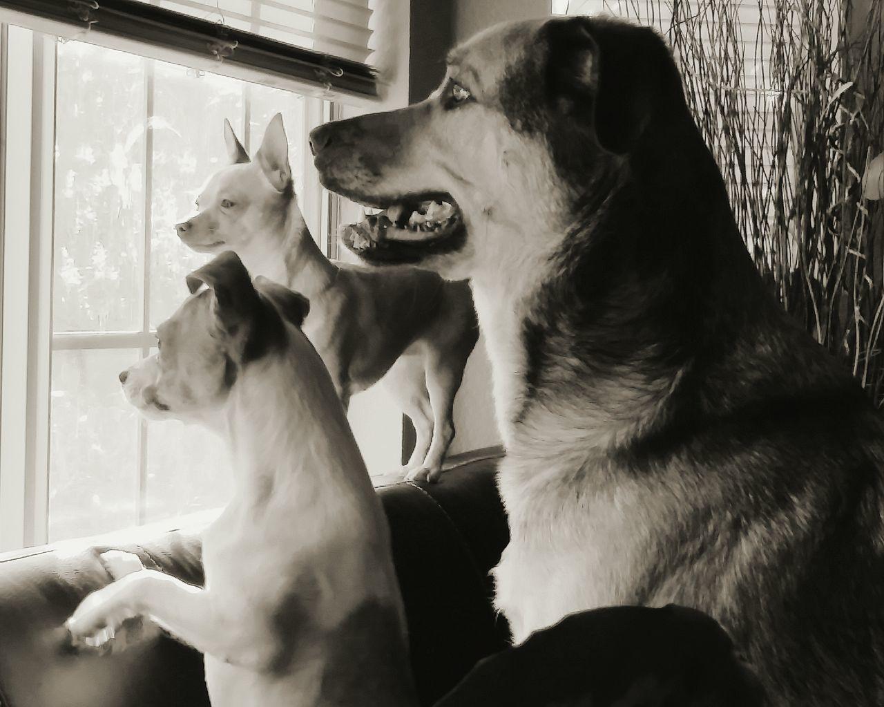 Cute Pets People Watching Love ♥ Furbabies Friends ❤ Fury Friends
