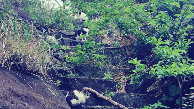 Japan Travel Peace Chiba Chiba,Japan Nokogiriyama Cats Noraneko Sleep Mountain Relaxing Nuturel