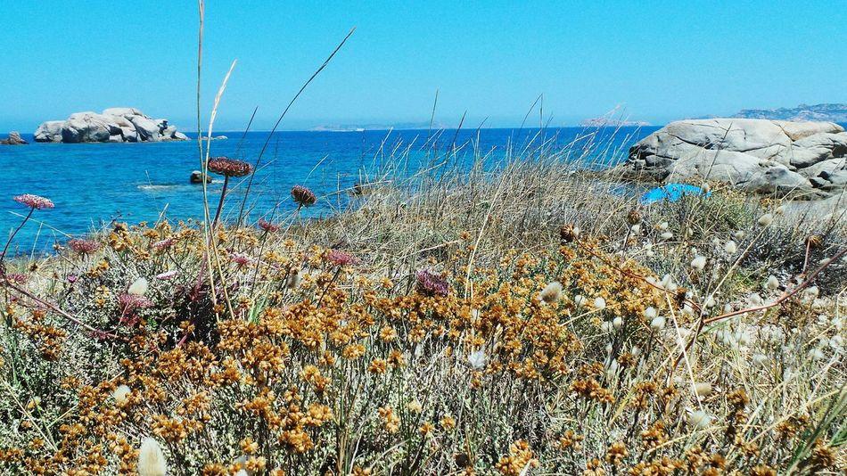 Showcase:July 43 Golden Moments Blue Sea And Blue Sky Blue Sea On The Way Summer_collection Nature Sea Summer Summer2016 Summertime Summer Views Blu Tourquise SeaSardegna Sardinia Santateresagallura ❤