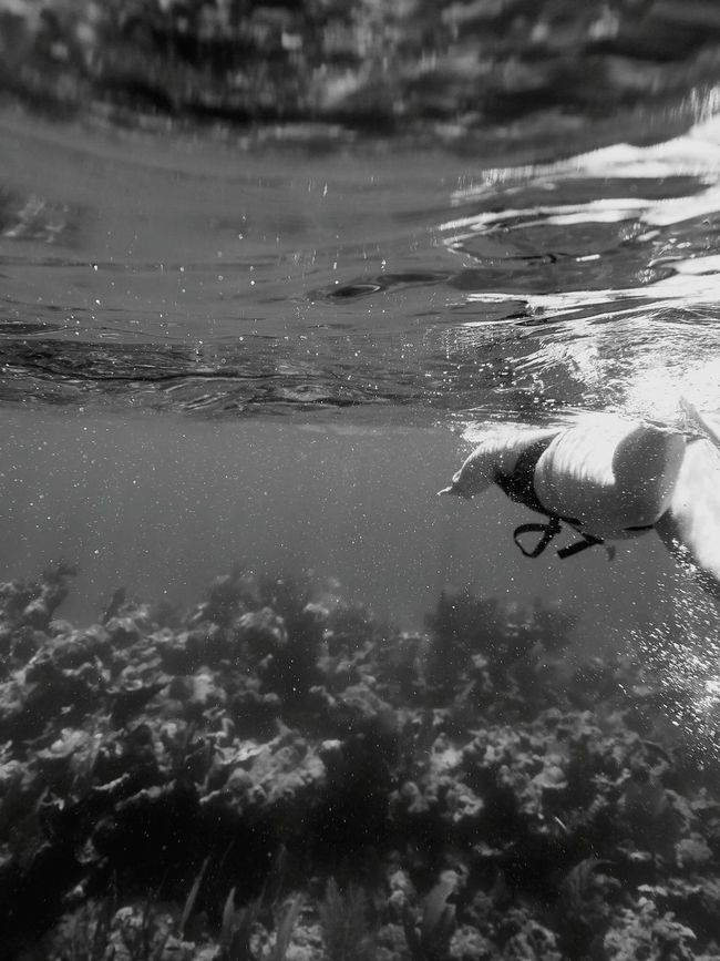 Masstrom Photography Join Me Stay True Swimming Ocean View Underwater Black And White Underwater Learn & Shoot: Balancing Elements Daily Life Be Yourself Love Yourself Simplicity Solitude Silence Love Black And White Photography Blackandwhite Photography Learn & Shoot: Simplicity Beach View Key Largo Follow Your Dreams Salt Life Darker Days Waves Are Pumping Adventure Club