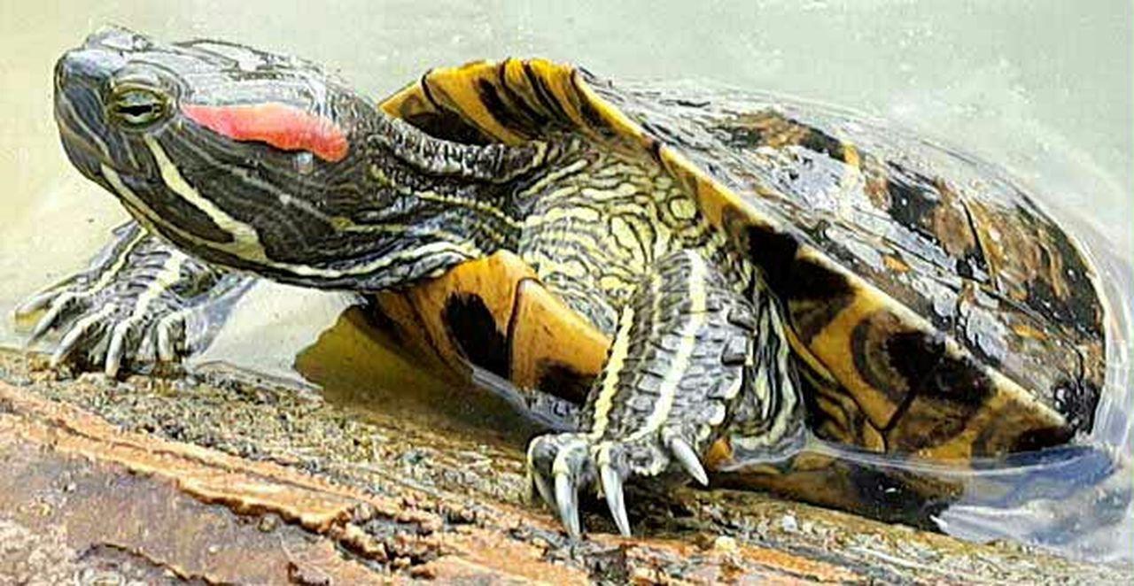Turtles Turtle