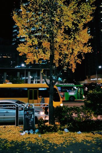 Tree Autumn Car Outdoors Nature Transportation Yellow Growth Beauty In Nature No People Day Xe2s Fujifilm Fujifilm_xseries The Week Of Eyeem