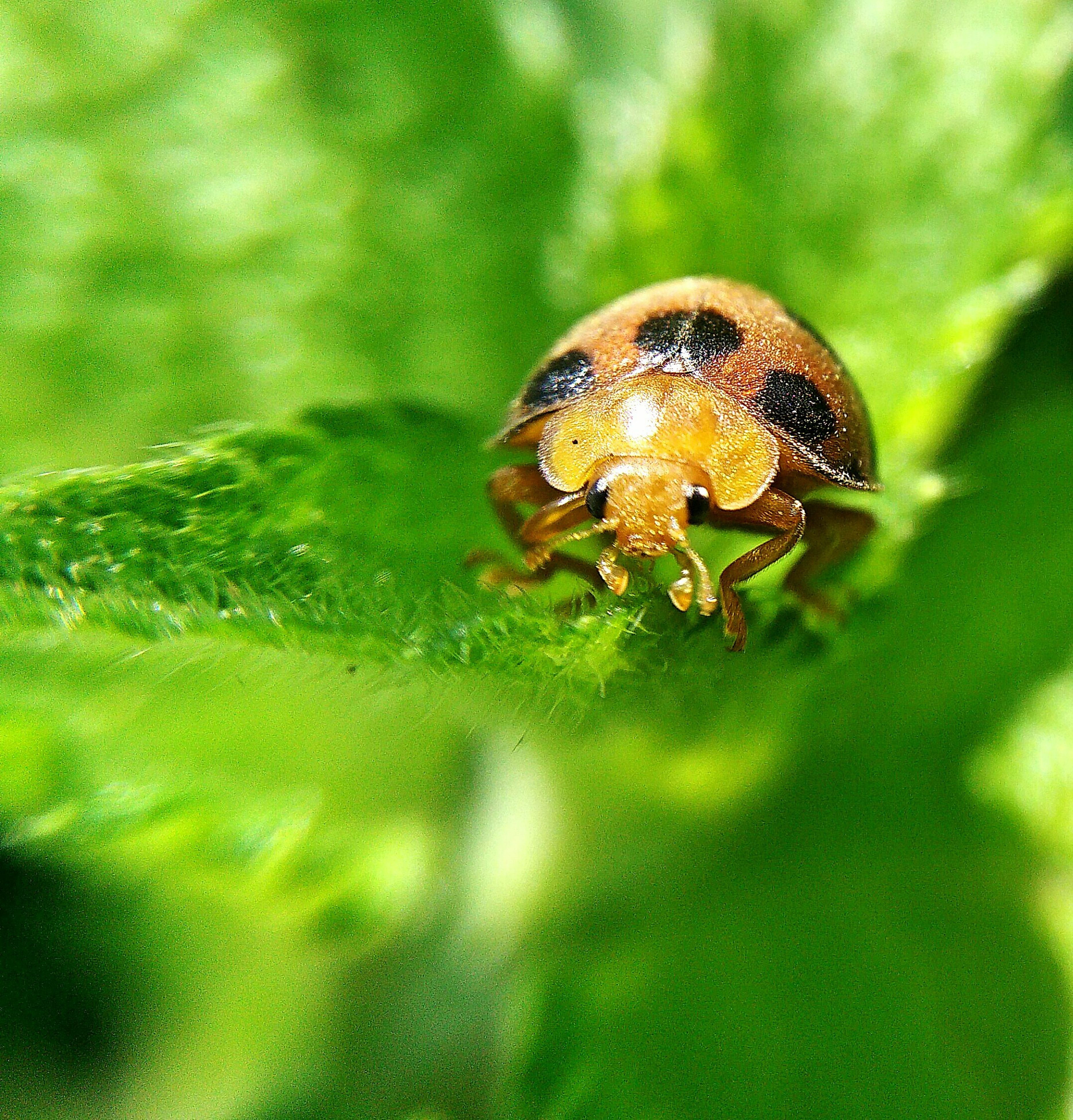 one animal, animal themes, close-up, animals in the wild, wildlife, green color, focus on foreground, selective focus, nature, insect, day, outdoors, no people, beauty in nature, leaf, growth, snail, spotted, plant, natural pattern