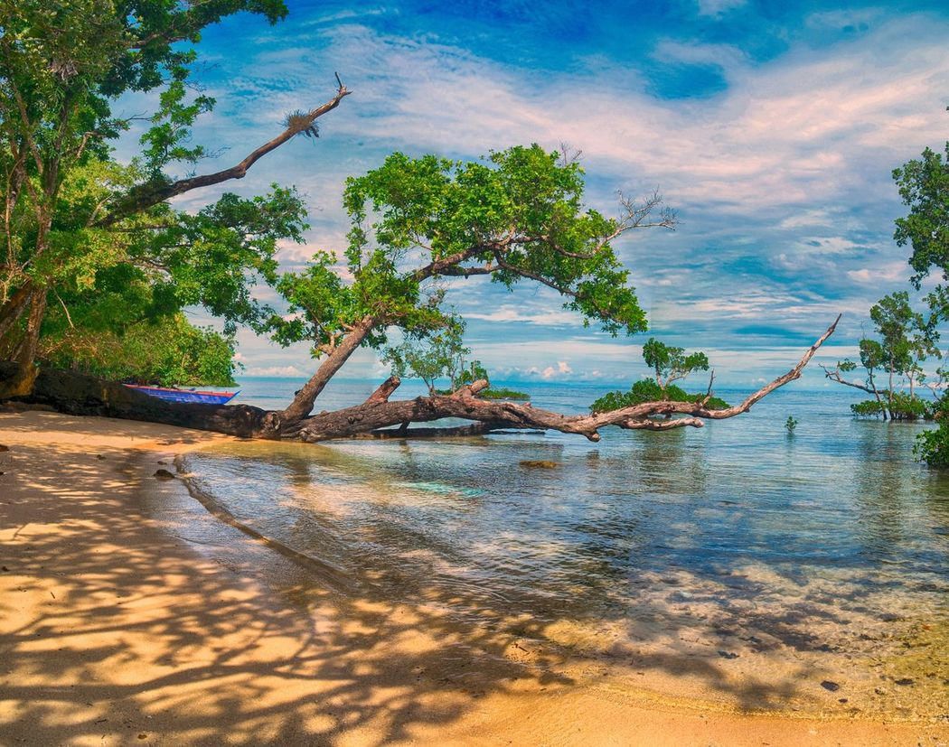 Mery Beach Mangrove Outdoors Tree Beauty In Nature Mangroves No People EyeEm Gallery Eyeemphoto EyeEm Nature Nature Photography Freshness The Week On Eyem Cloud Landscapes With WhiteWall Nature_collection Seascape Seawater Sand ShadeowLittle Wave