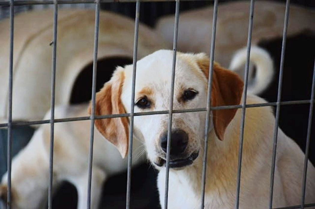 Pets Dog Cage One Animal Trapped Prison Close-up AdoptDontShop Adopt A Shelter Pet