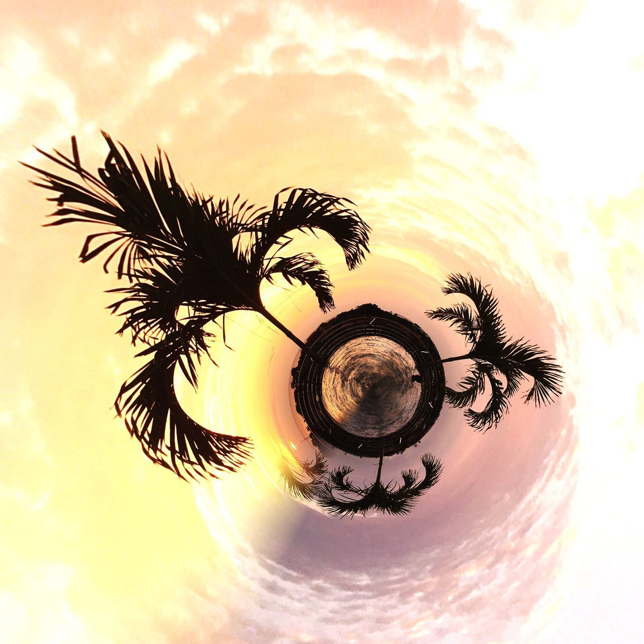 Check This Out Palm Trees Nature Abstract Photography Abstract CreativePhotographer Tinyplanet Tinyplanetfx Sky Planet View Taking Photos Check This Out