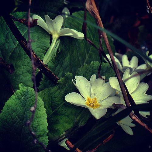 Naturelovers Macroshot Photography_lovers Flowers 🌺💠📷 Feel The Journey