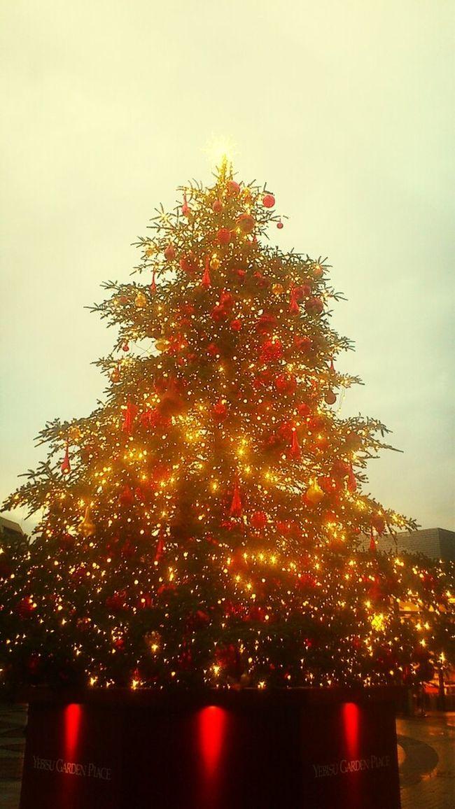 Tree_collection  Christmas Tree